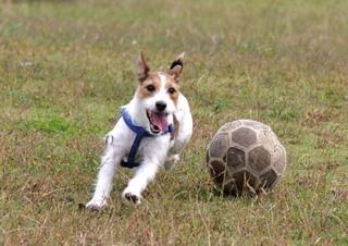 犬_サッカー.jpg
