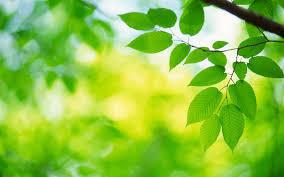 green_folic_acid.jpg