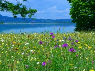 meadow_flowers_bloom_219600[1].jpg