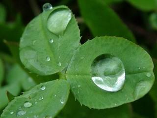 rain (2).jpg
