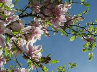tree_flower_spring_216137[1].jpg